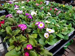 Alsager Community Support | Free Help and Advice for Local People | Bedding plants