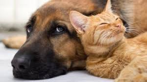Alsager Community Support | Free Help and Advice for Local People | Dog and cat